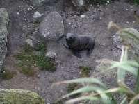 Robbenbabies