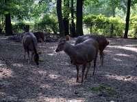 Tierpark-20092009_IMG_7050