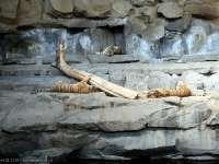 Tierpark-20092009_IMG_7135