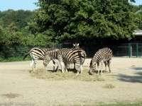 Tierpark-20092009_IMG_7147