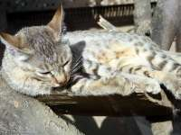 Tierpark-20092009_IMG_7199