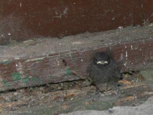 Fusselhaare - gerade aus dem Nest gefallen