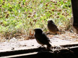 Vogelgeschwister